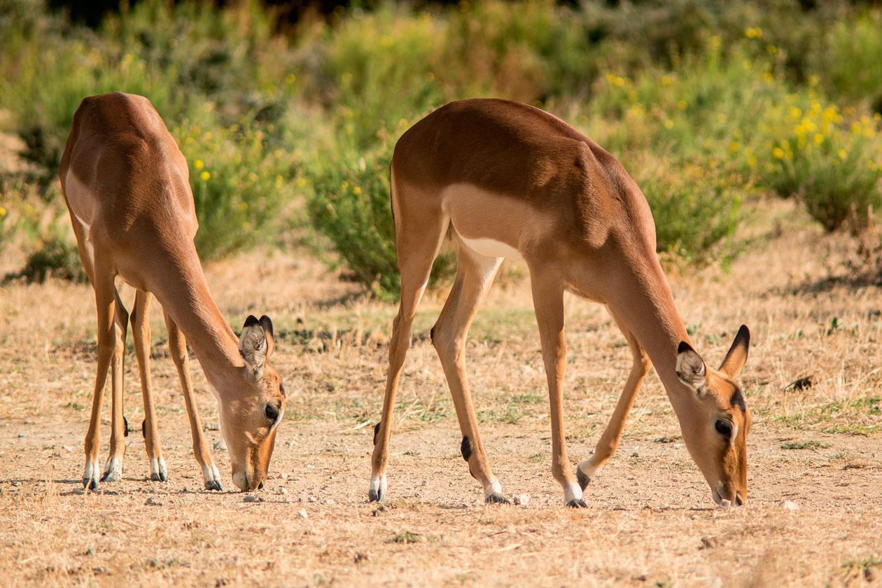 Que ver en la Reserva Africana de Sigean