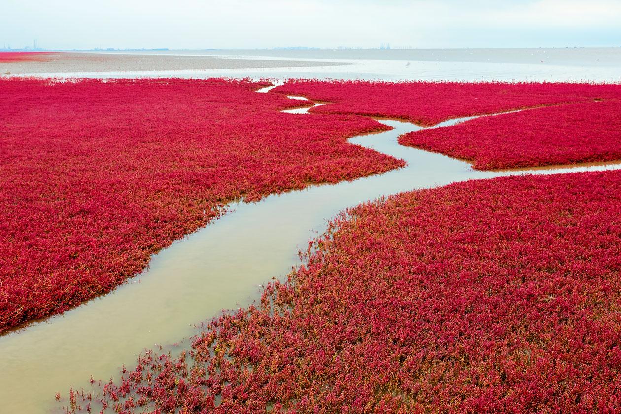 Que ver en la Playa de Panjin