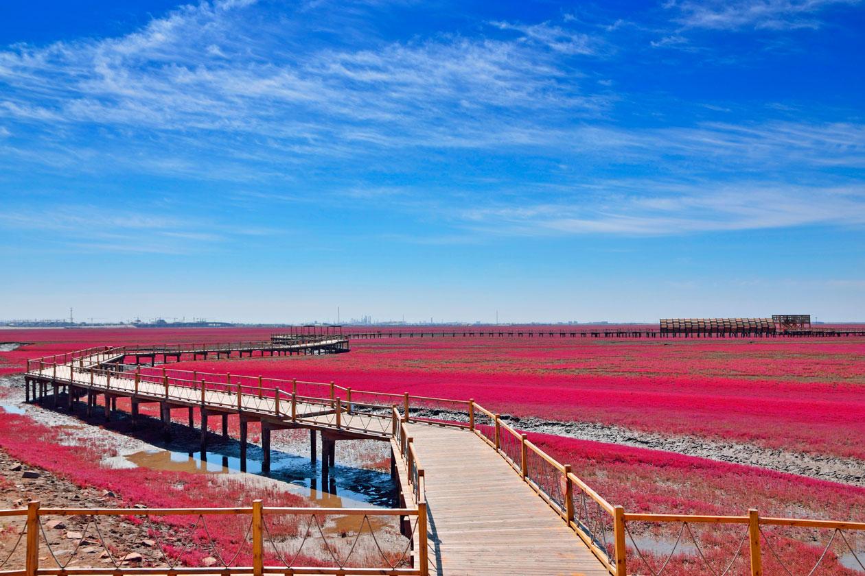 Visitar la Playa de Panjin