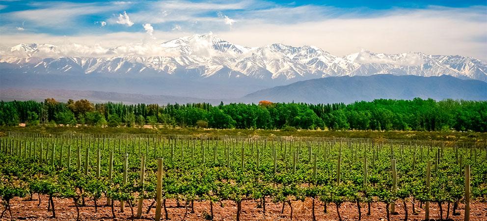 Recorrer los viñedos del valle de uco